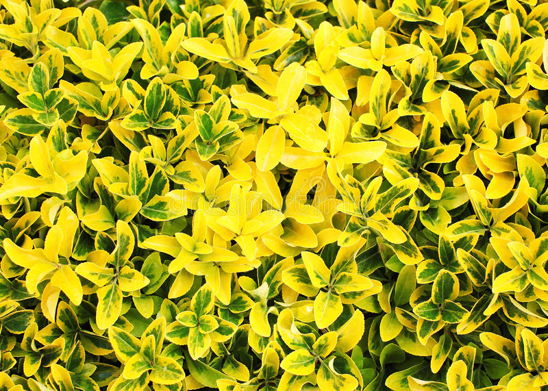 The bright yellow spring flowers photo. Abstract floral background royalty free stock photo