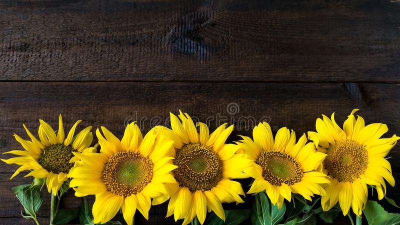 Bright yellow sunflowers on natural rustic texture wooden board. stock image