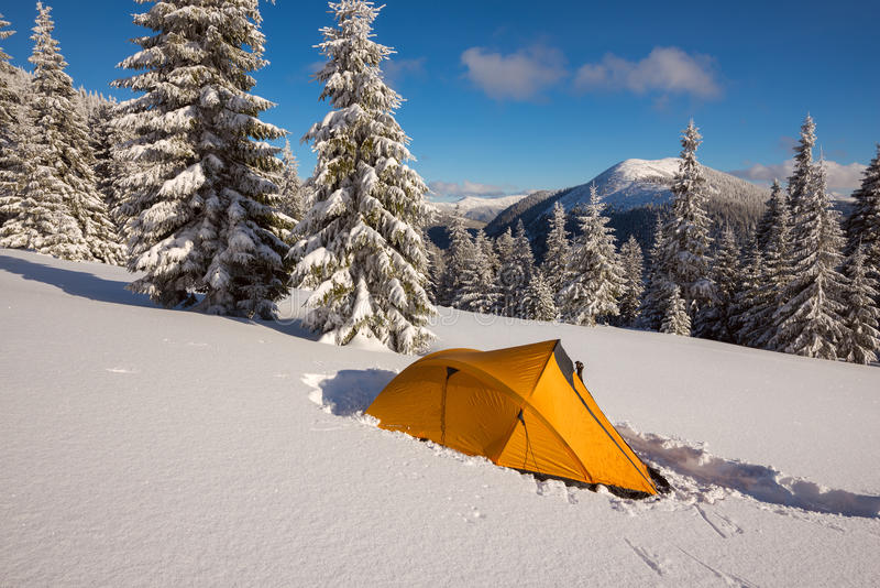 Bright yellow tent at alpine meadow among the snow-covered firs stock photo