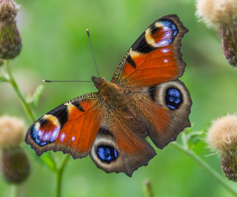 Brightly colorful butterfly on flower stock photo