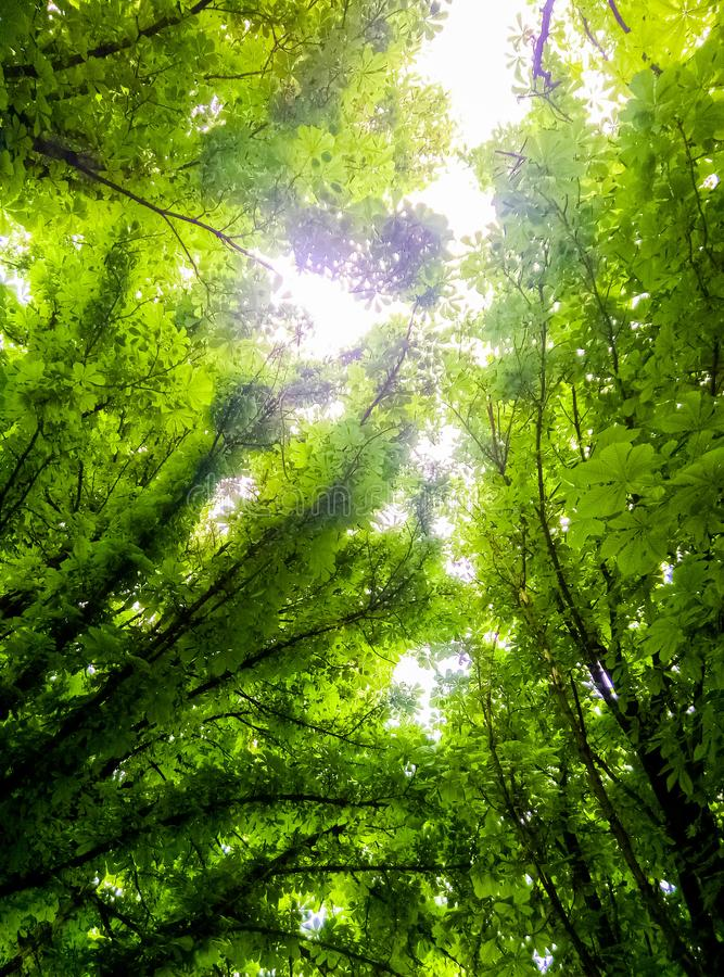 Brightly green foliage on the trees stock photos