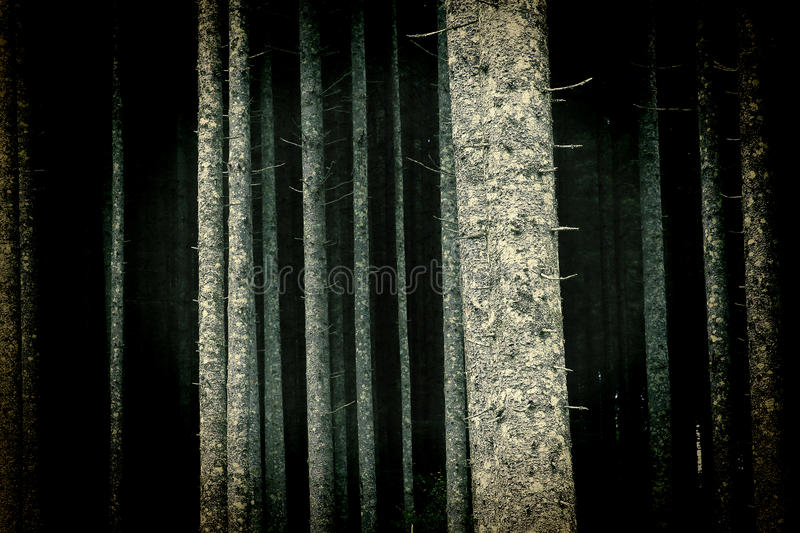 Brightly lit trees in forest. Spooky, brightly lit trees in forest in the night royalty free stock images
