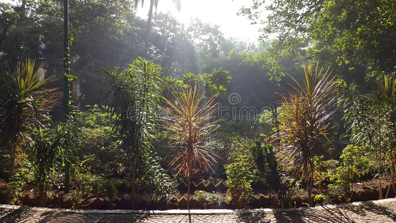 Walking track in neighborhood garden. A brightly sunlit walking path paved with pattern tiles set up in the garden with small plant trees lit up in morning sun royalty free stock images