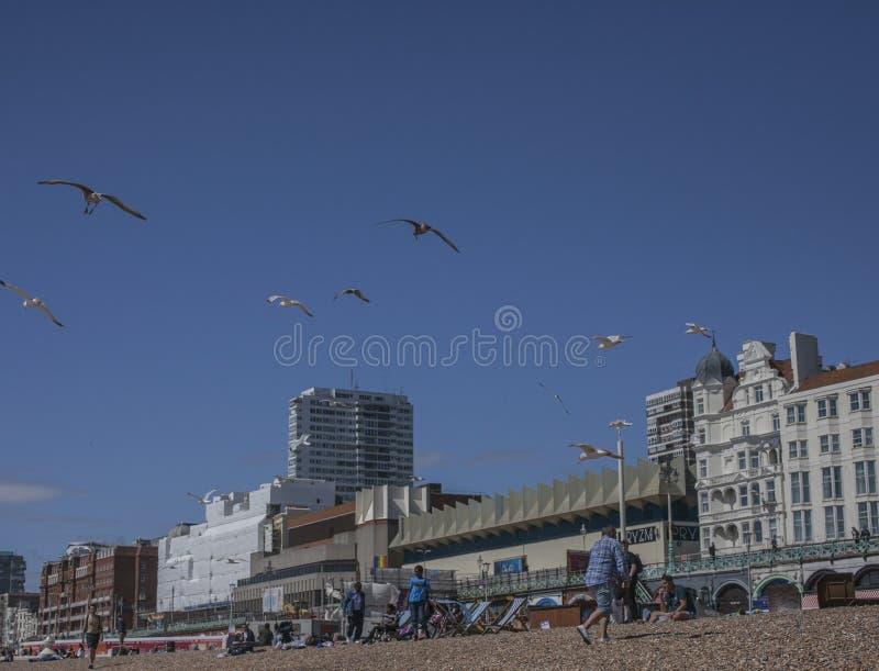 Brighton England - folk som har gyckel på stranden och seagullsna; blåa himlar royaltyfri foto