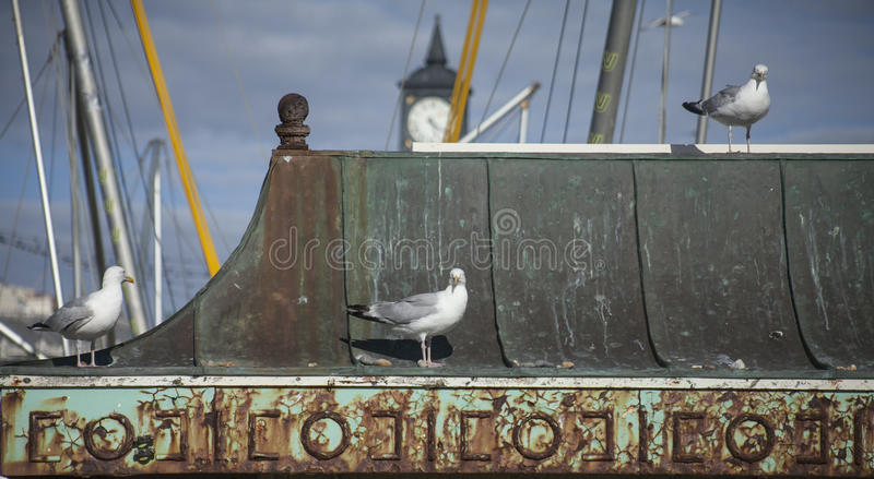 Brighton, England - seagulls. This image shows some seagulls on a beach in Brighton, England. It was taken on a sunny day in August 2017 stock image