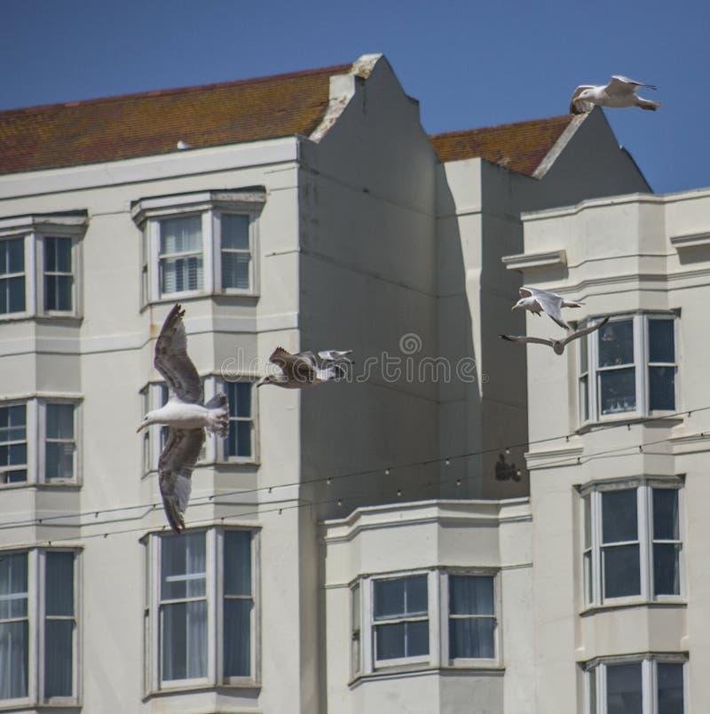 Brighton, Inghilterra - case bianche e volata dei gabbiani fotografia stock