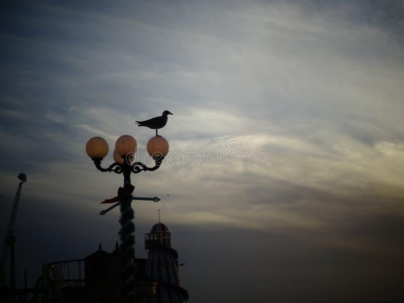 Brighton på skymning royaltyfri foto