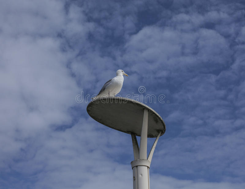 Brighton - a seagull and a blue sky. This image shows a beach in Brighton, England with some people walking and chilling royalty free stock photos