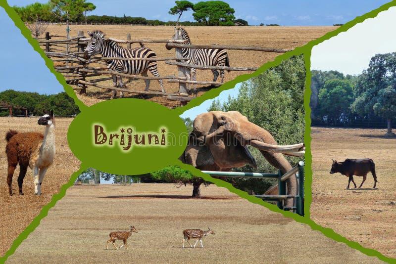 Brijuni national park safari collage. Isria, Croatia royalty free stock photos