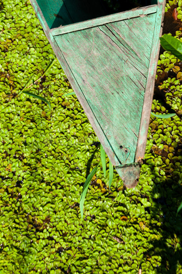 Brilhe brilhante em um barco verde nas plantas fotos de stock