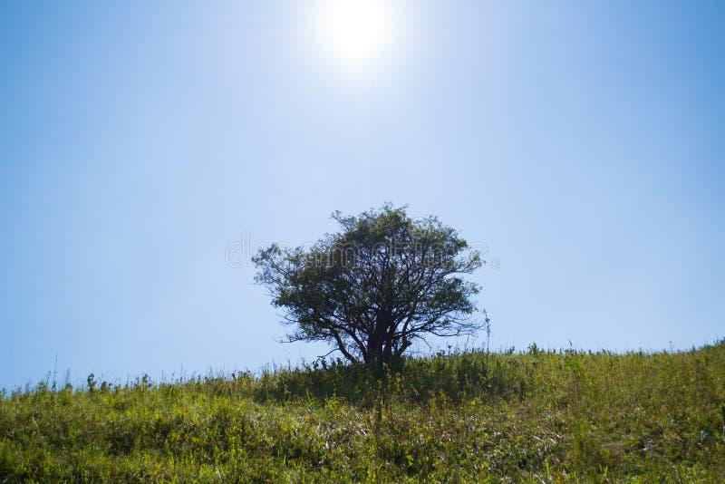 Brilho de Sun a árvore imagens de stock