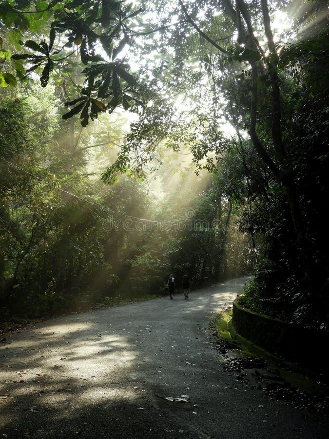 Brilho de Sun atrav?s da floresta imagem de stock royalty free
