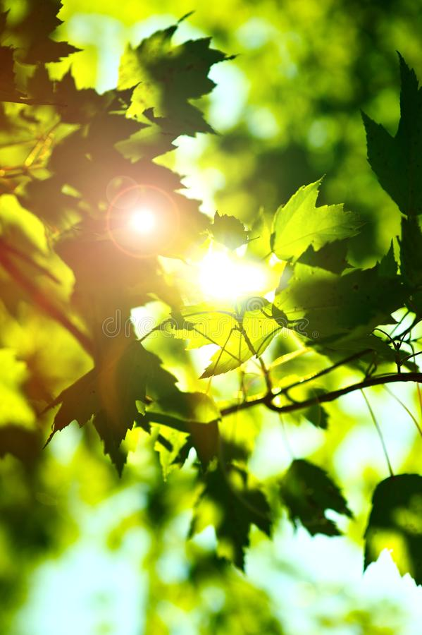 Brilho do verão foto de stock