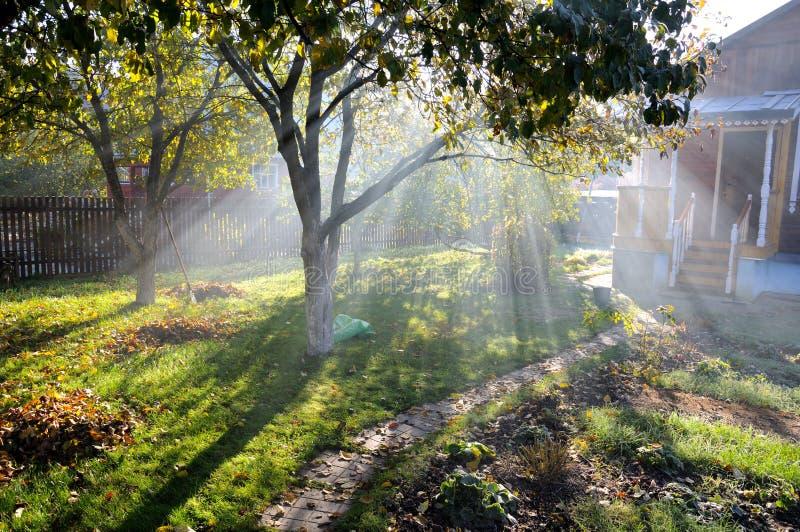 Brilho dos Sunbeams através das árvores do outono foto de stock royalty free