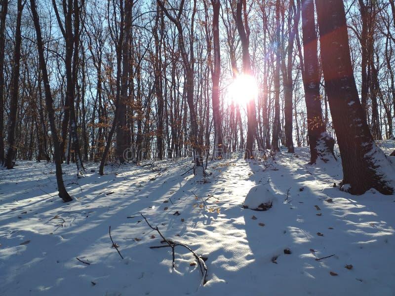 Brilho na floresta imagens de stock royalty free