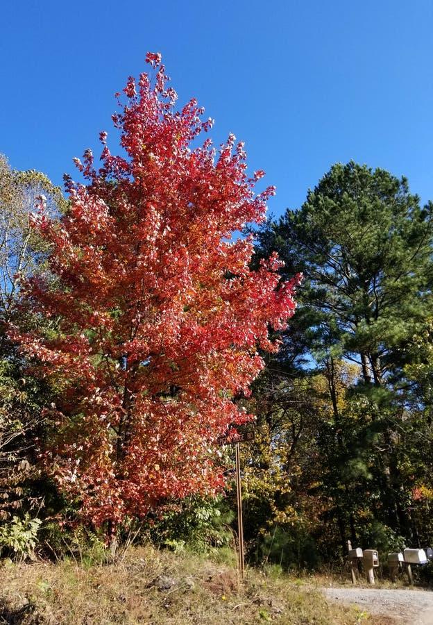 Briljante Dalingskleuren - Appalachian Forest Autumn Foliage royalty-vrije stock foto's