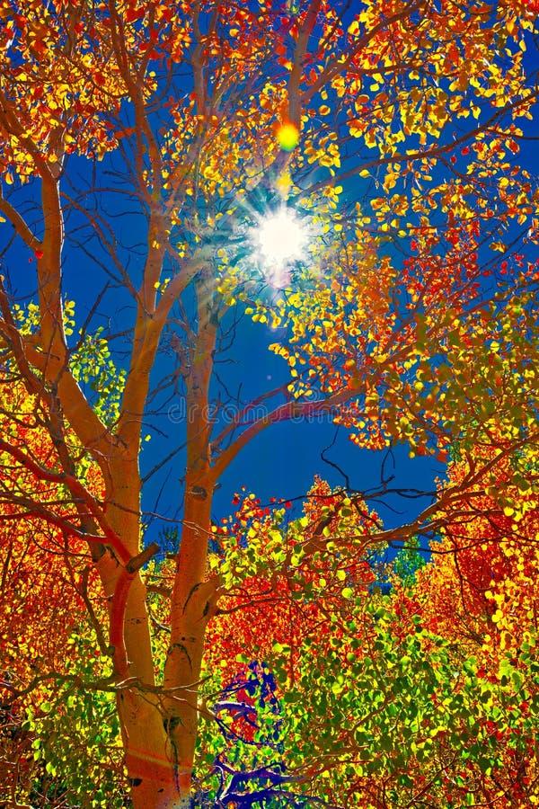 Briljante Kleuren van Espen, Azure Sky en de Zon stock foto