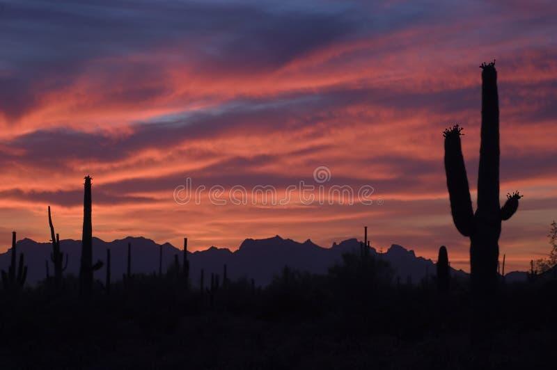 Briljante Zonsondergang en Cactus Saguaro royalty-vrije stock foto