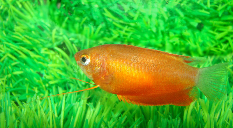 brillamment poissons peints petits photo stock