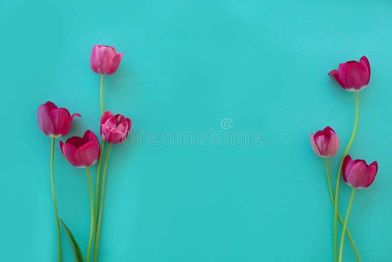 Brillante fresco de los tulipanes rojos del rosa en un fondo de textura azul de la luz verde fotos de archivo