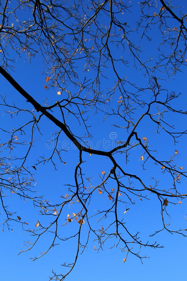 Brilliant blue skies with tree branches and remaining leaves. Hopeful view of brilliant blue skies and tree branches, with the last of Fall leaves hanging on for stock photography