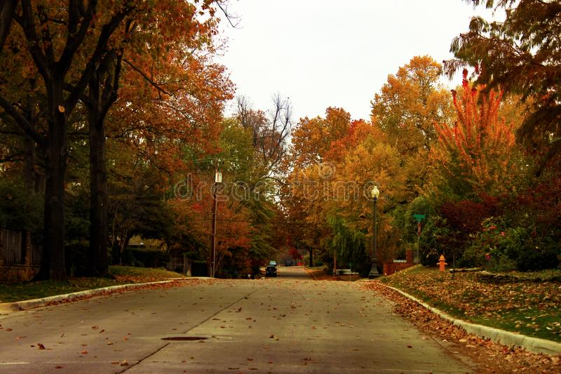 Brilliant multicolor fall trees blowing across a neighborhood street at golden hour royalty free stock images