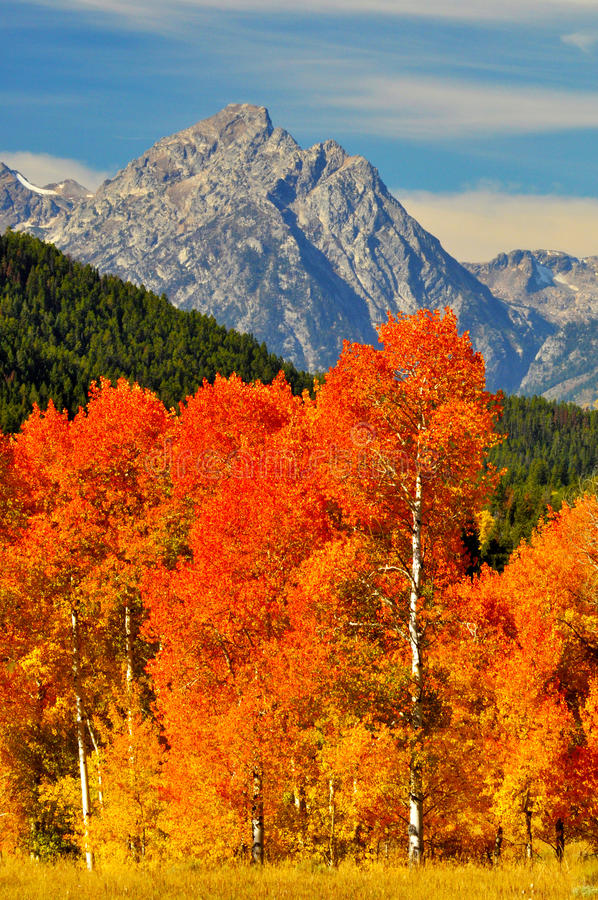 Download Brilliant Orange Trees And Snow Capped Mtns. Stock Image - Image: 23994561