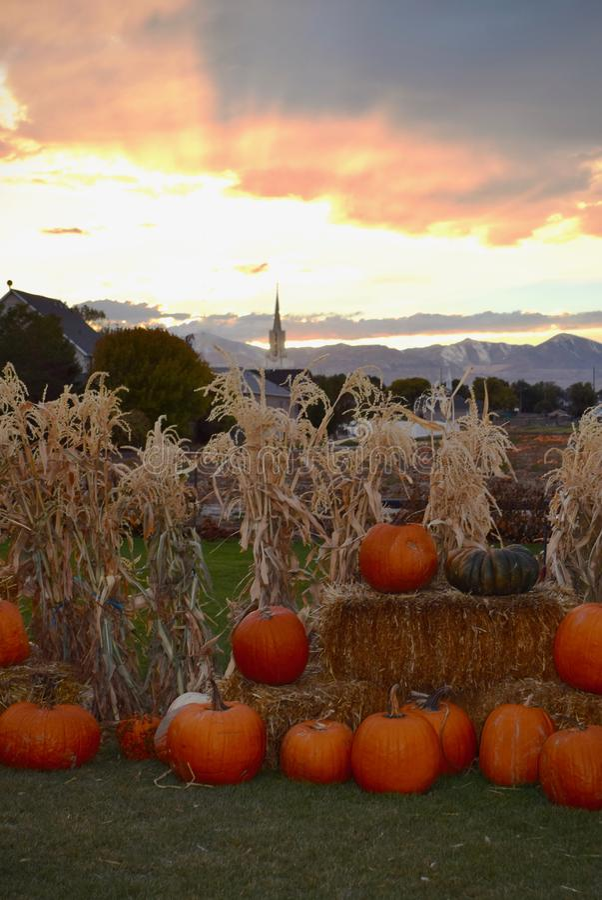 Celestial pumpkin patch stock photos