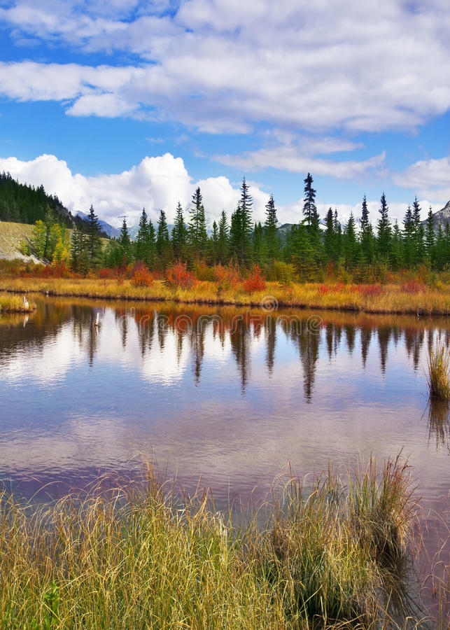 Brilliant small lake royalty free stock images