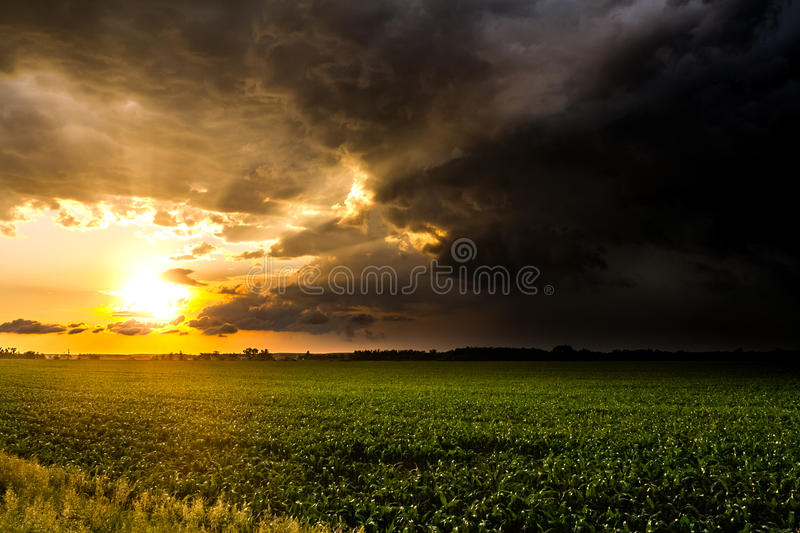 Brilliant Sunset Rays After a Storm. The sunset shines in brilliant color from behind the storm clouds over a cornfield royalty free stock photos