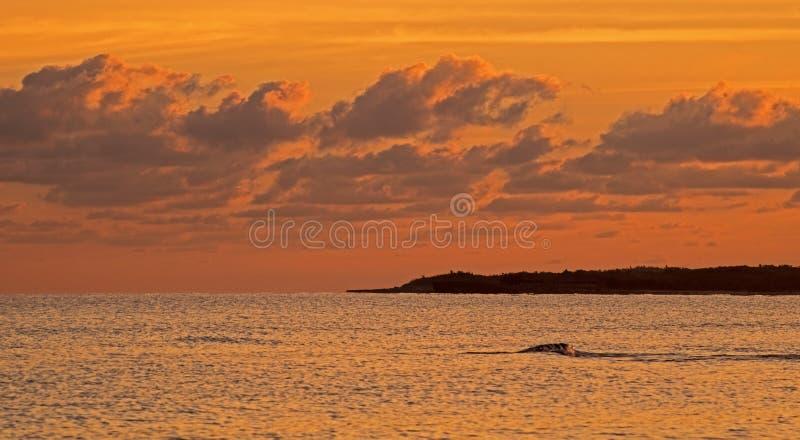 Brilliant Tropical Sunrise In Cayo Coco, Cuba stock images