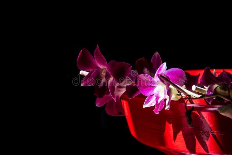 Brillo púrpura de la orquídea fotografía de archivo