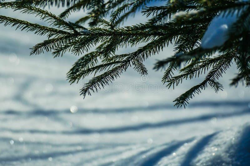 Brillos de la nieve de marzo imagenes de archivo