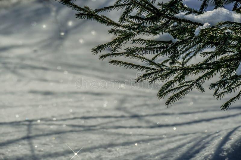 Brillos de la nieve de marzo fotos de archivo libres de regalías