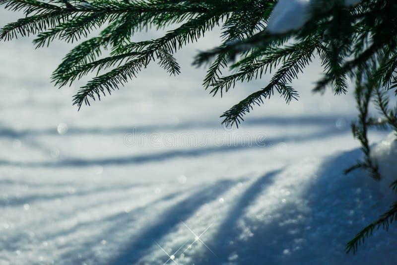 Brillos de la nieve de marzo imagen de archivo libre de regalías
