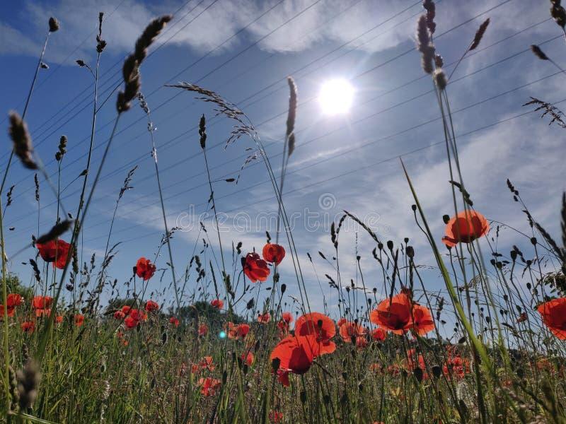 Brillos rojos en el cielo fotos de archivo libres de regalías