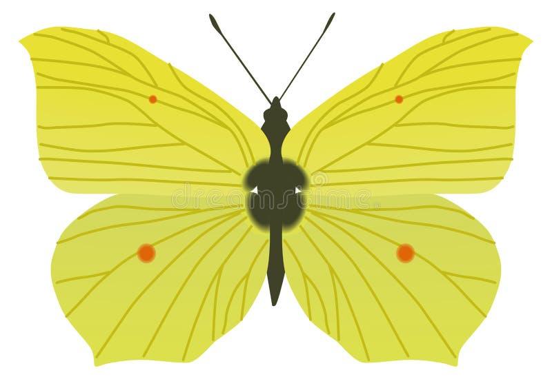 Silver Butterfly Clipart & Silver Butterfly Clip Art - Silver Butterfly  Vector Png, Transparent Png , Transparent Png Image - PNGitem