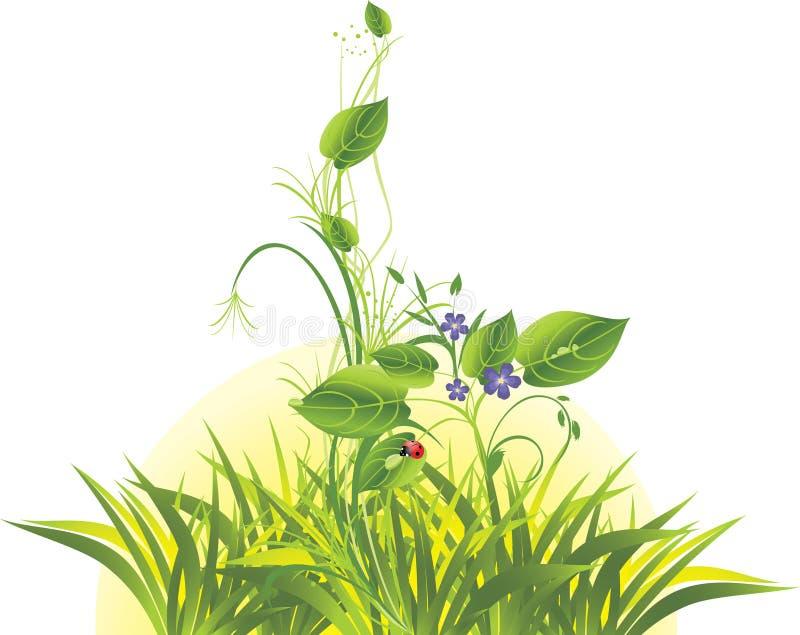 Brin avec les fleurs, l'herbe et la coccinelle. Lever de soleil illustration libre de droits