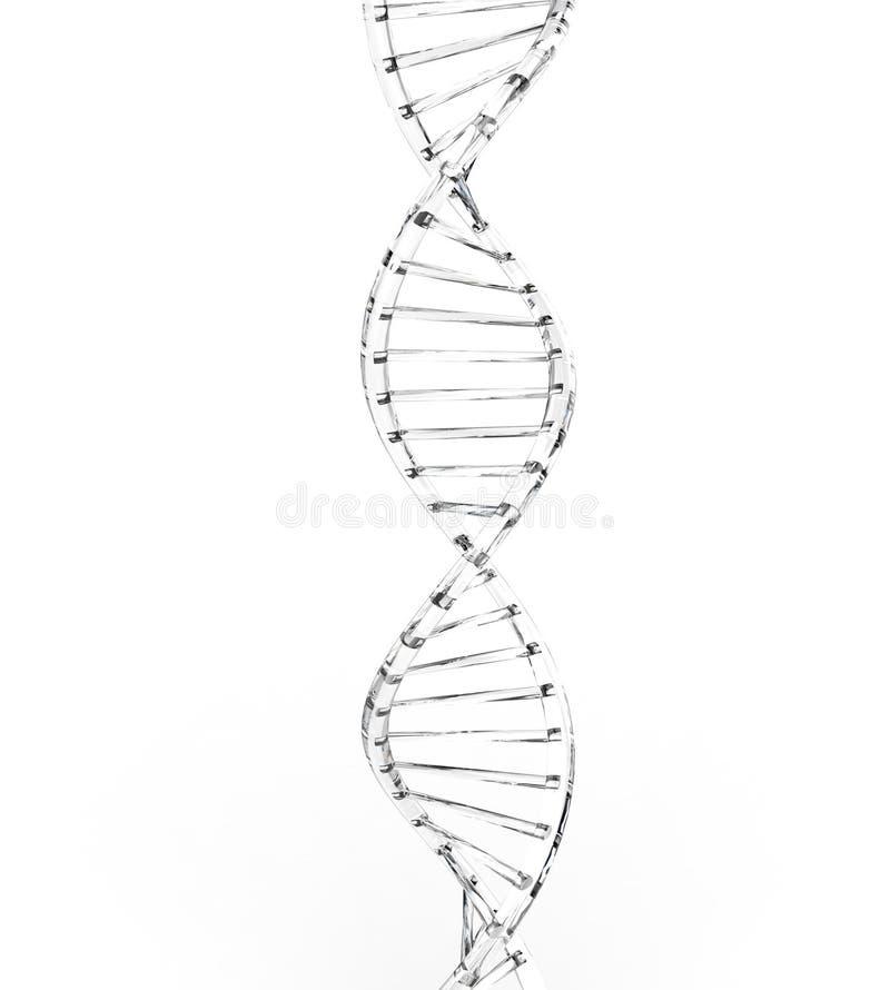 Brin clair d'ADN illustration libre de droits