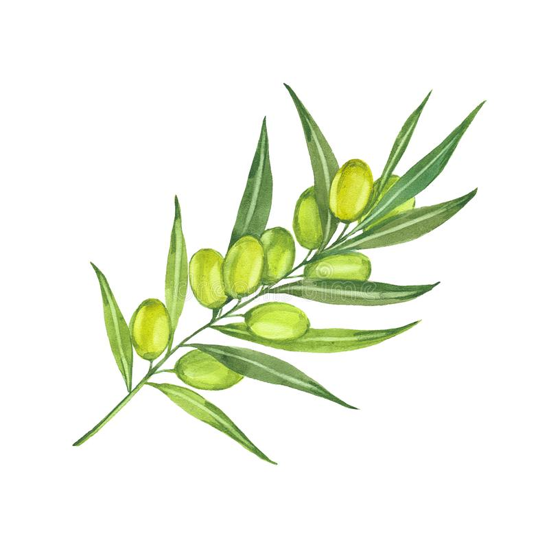 Brin d'aquarelle d'olive illustration stock