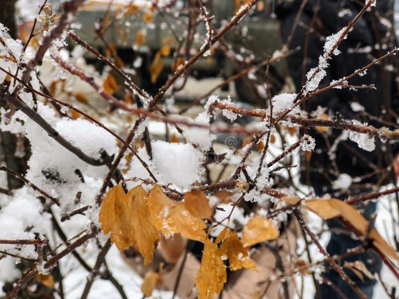 Brin d'un arbre, feuilles dans la neige Neige sur la rue de la ville Le début de l'hiver dans Bakuriani image libre de droits