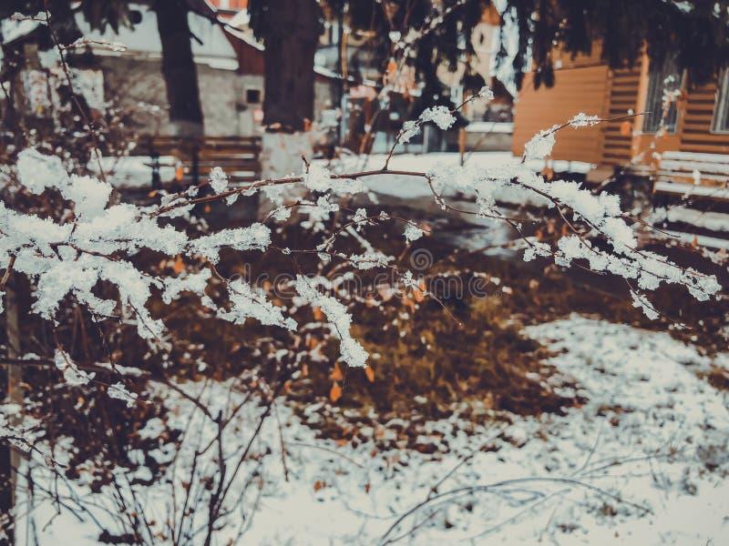 Brin d'un arbre, neige congelée Neige sur la rue de la ville Le début de l'hiver dans Bakuriani photos libres de droits