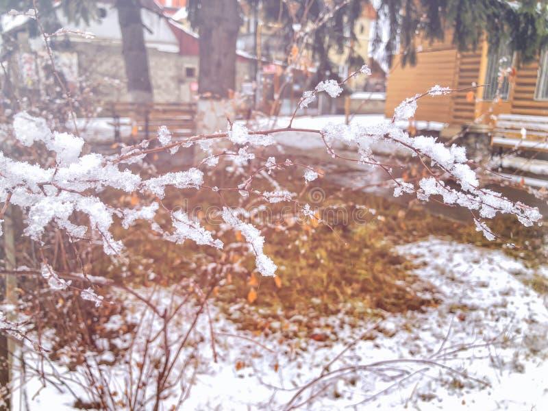 Brin d'un arbre, neige congelée Neige sur la rue de la ville Le début de l'hiver dans Bakuriani images libres de droits