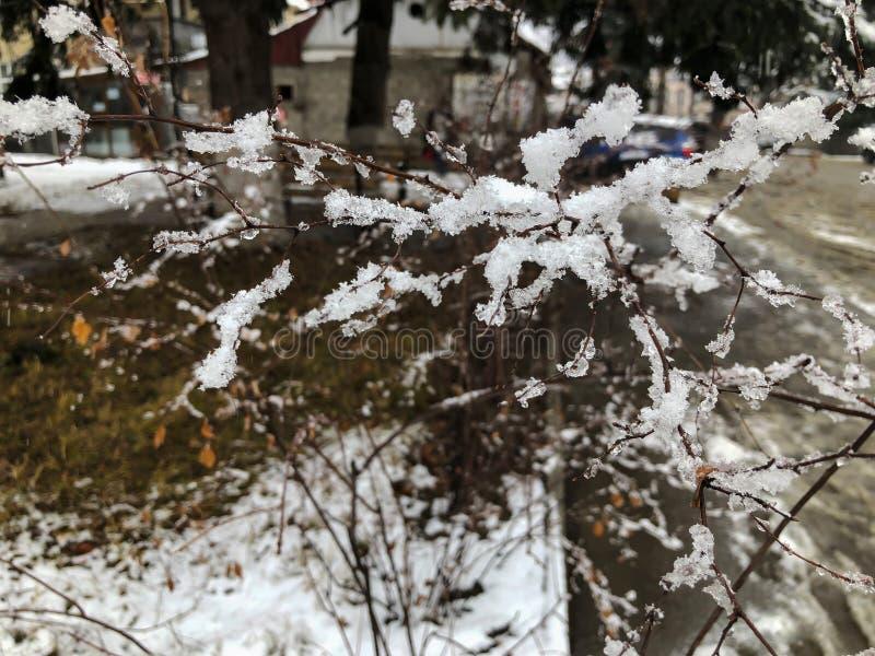 Brin d'un arbre, neige congelée Neige sur la rue de la ville Le début de l'hiver dans Bakuriani image libre de droits