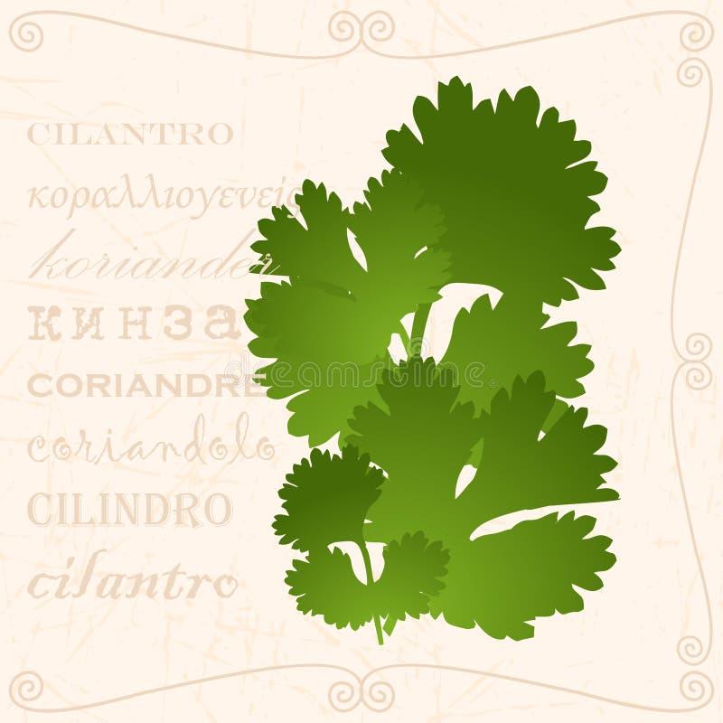 Brin de cilantro dans le style de vintage illustration stock