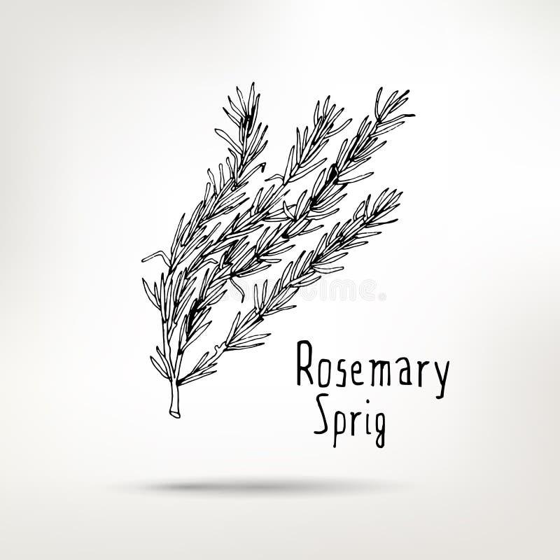 Brin dessiné par encre de Rosemary illustration stock