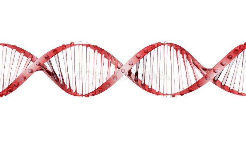 Brin en verre d'ADN illustration libre de droits