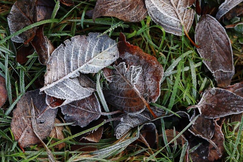 Brina sulle foglie di autunno nell'erba fotografia stock libera da diritti