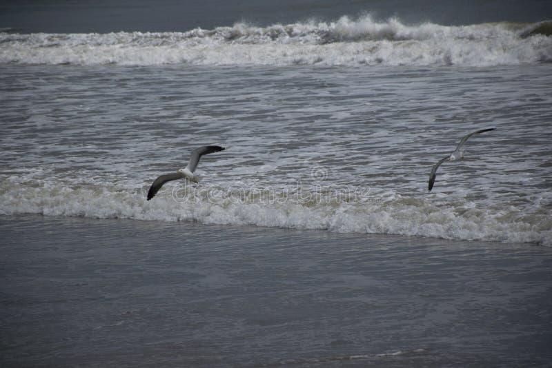 Brincando sobre o mar, ainda. stock image
