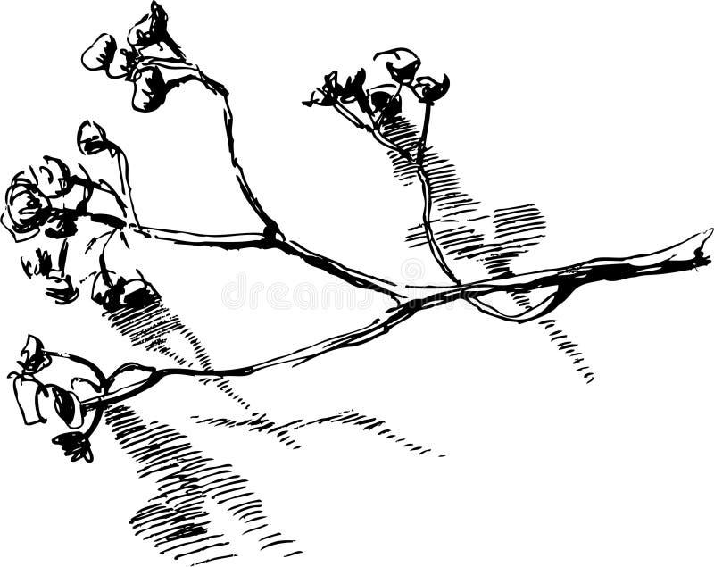 Brindille illustration stock